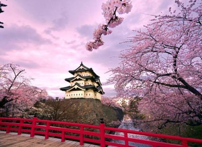 Japón y sus cerezos en flor