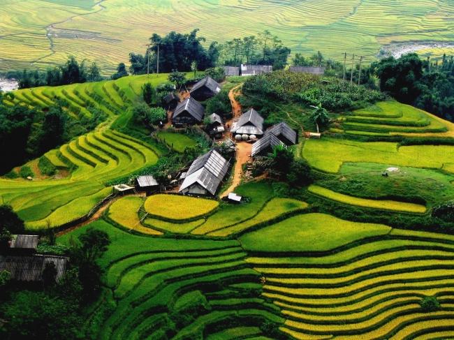 Vietnam: Extensión terrazas de Sapa