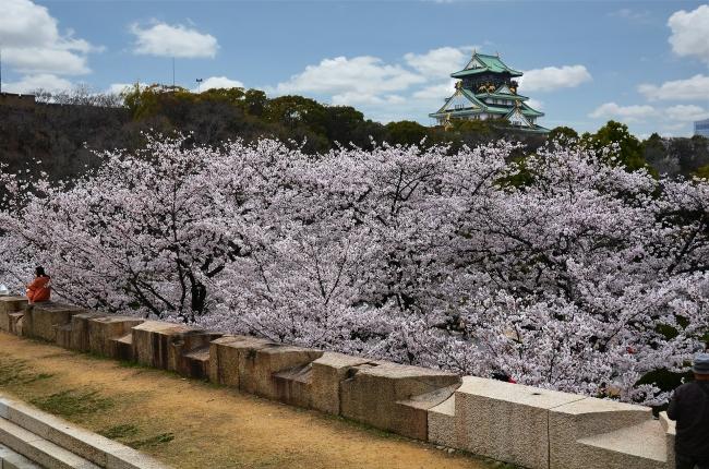 Cerezos en Osaka